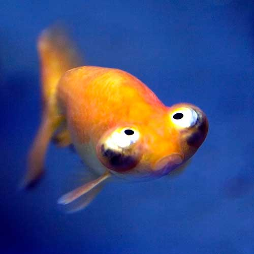Funnyfish36