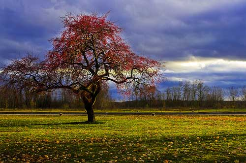 Appletree86