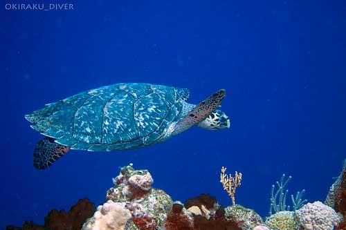 turtle80
