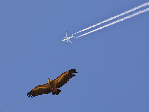 airtraffic22
