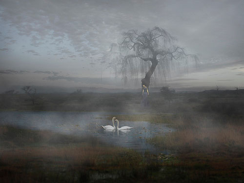 weeping_willow_11