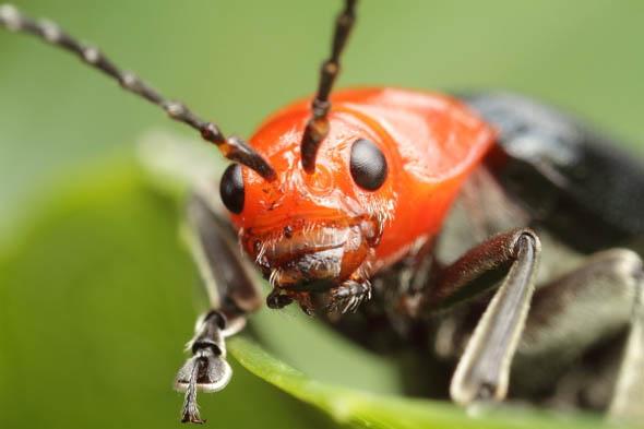 Beetle portrait39