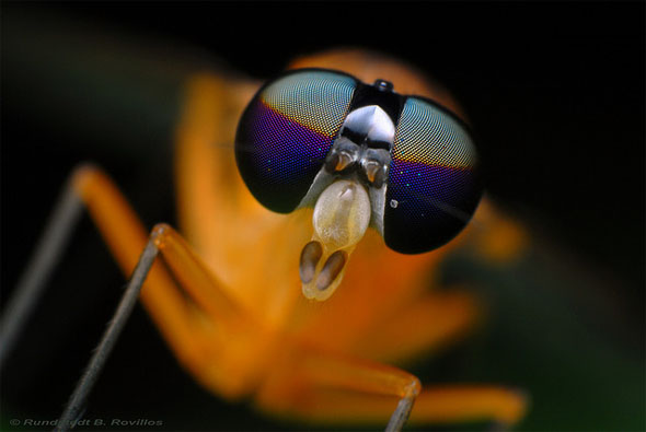 The eyes of a fly23