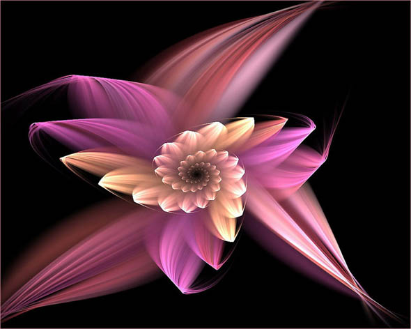 Windflower18