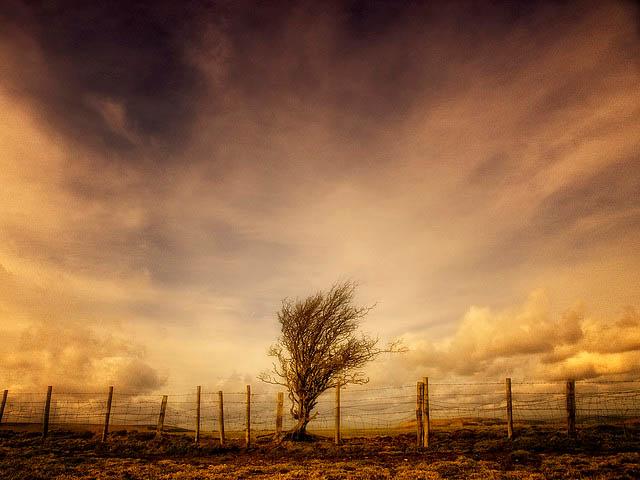 fence_photo_25