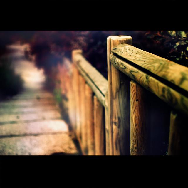 fenced_friday_11