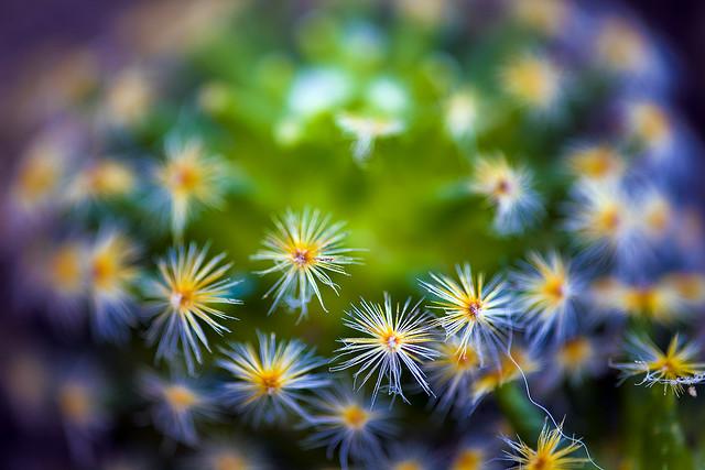 little_stars