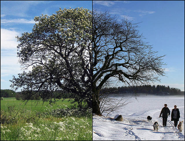 summer_vs_winter_12