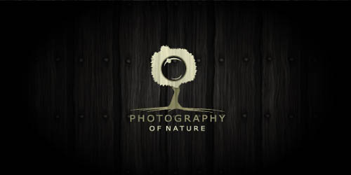 Photography of nature28