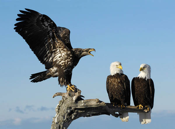 Bawler by Harry Eggens_63