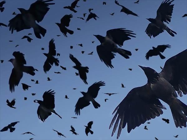 Birds by Dragan Todorovic_77