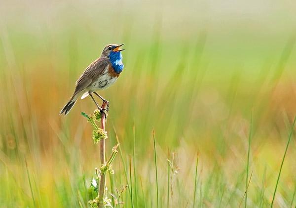 Blue Song by Farid Sani_58