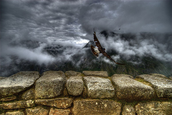 Caracara takes off by Ville Miettinen_72