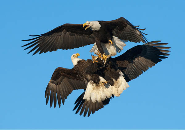 Fight For Fish by Harry Eggens_50