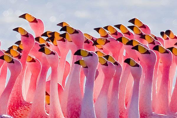 Flamingos Partying by Pedro Szekely_7
