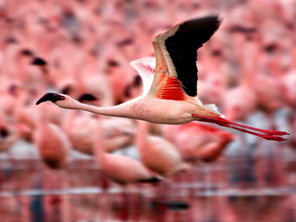 Flamingos by Gina Pflegervu_4