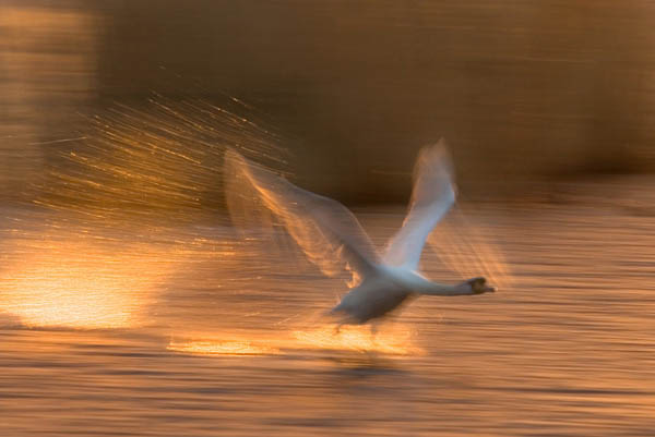 Flight by Steve Garrington_5