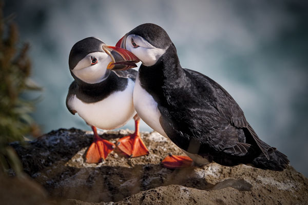 Sealed with a kiss by Ragnheidur Arngrimsdottir_66
