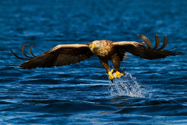 The Catch by Henrik Just_57