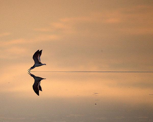 The Sky Skimmer by Bill Dalton_67