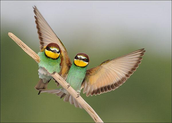 Under my wing by Luigino Snidero_74