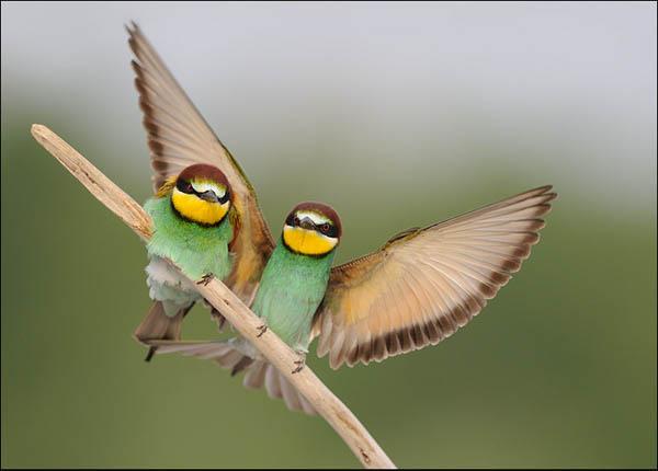 Under the wing by Luigino Snidero_48