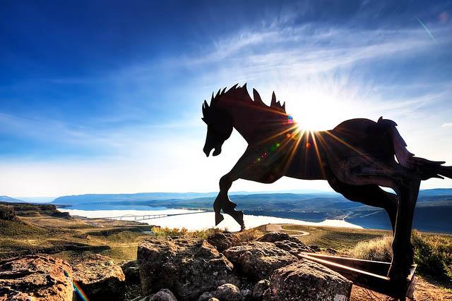 Wild Iron Horse_23