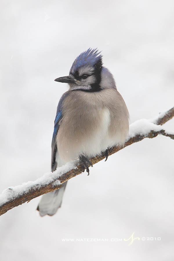 Winter Blue by Nzeman_39