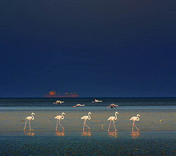 flamingo fashion show by rbsuperb_21