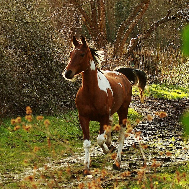 horse_photography_9