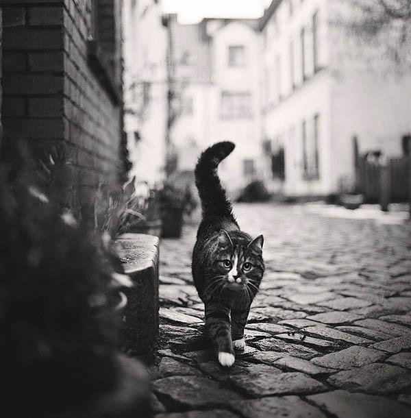cat_photo_20