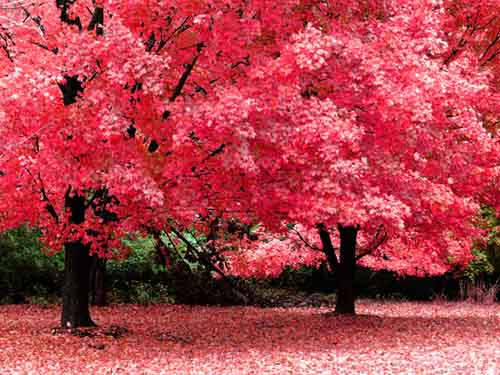 AutumnFantasy42