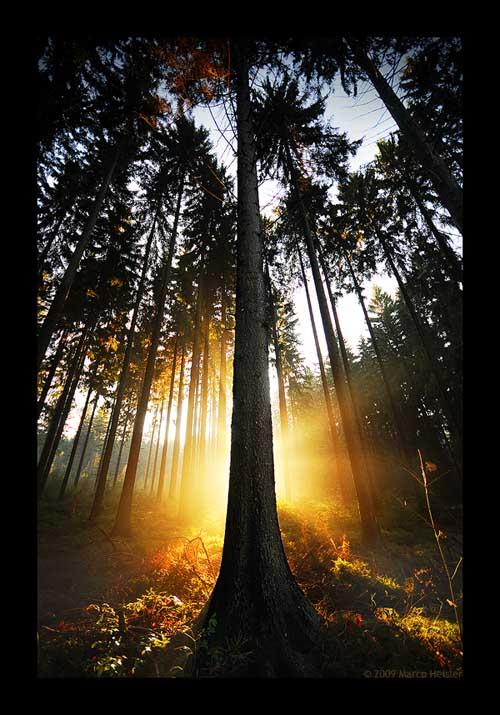 TreeOfLight77
