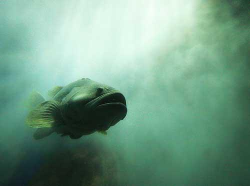 UnderwaterWorld25