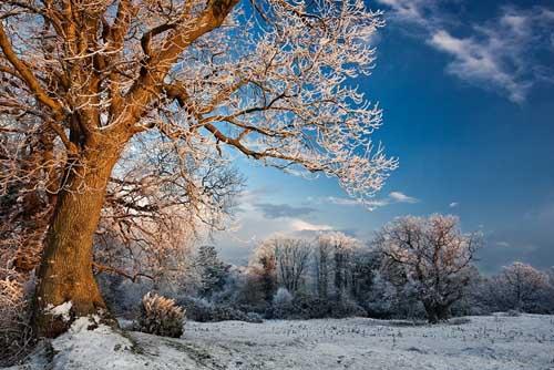 WinterEvening50