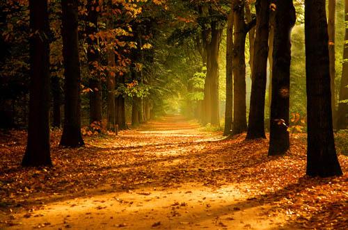 autumn3