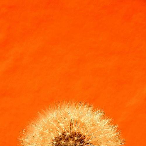 orangeyoudandy12