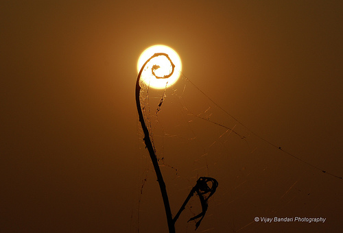 sunsetatgandipet44