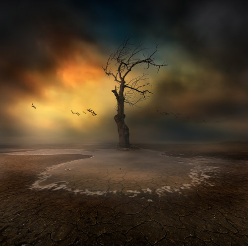 lonelytree13