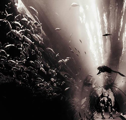 ocean_in_a_tunnel_by_gapgirl-18