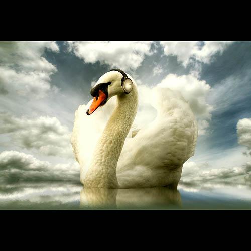 swan_surreal_19
