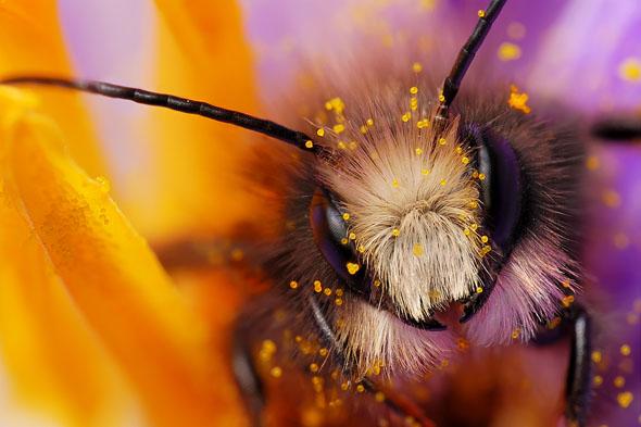 Miner Bee16