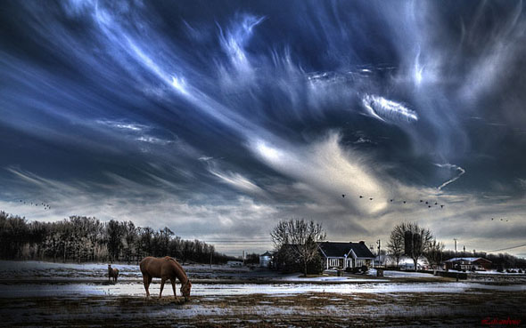 Sky horses and geese48