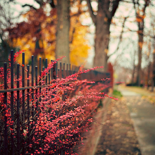 fence_photography_by_pixelmama_15