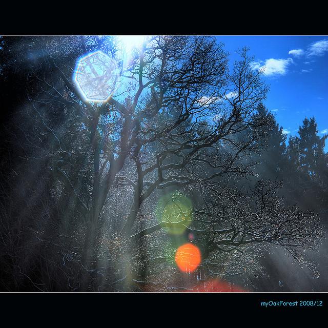 rays_in_sunlight_1