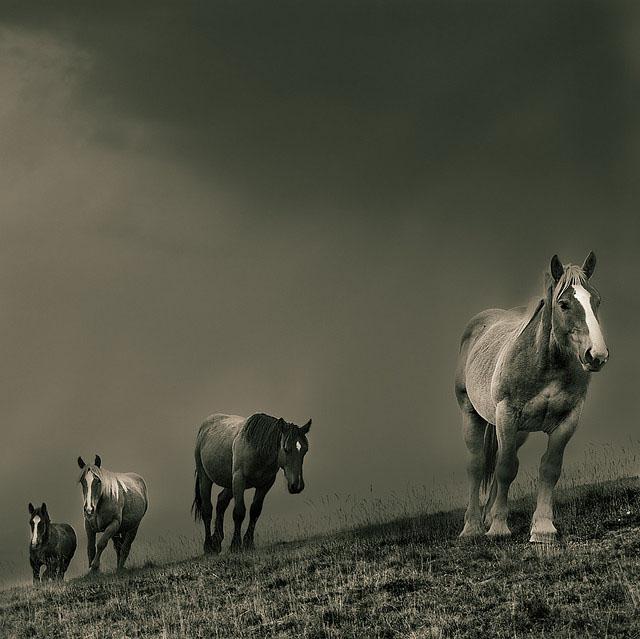 Cavalls-al-Balandrau_37
