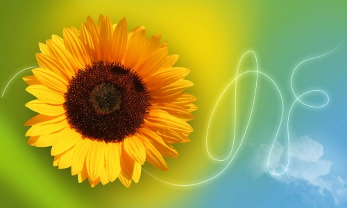 Sunflower Wallpaper_62