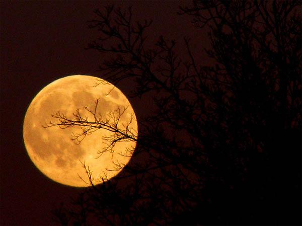 Tonight's Moon_2