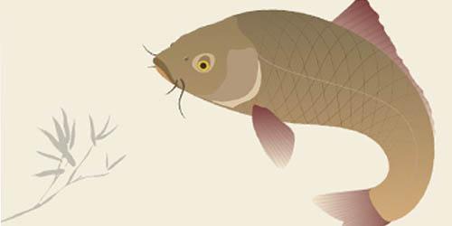 Traditional Japanese Koi Carp Illustration_30
