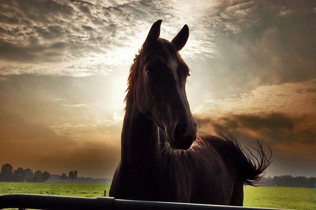 horse at sunset_26